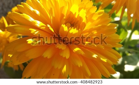 beautiful vibrant yellow flower outside in summer sunshine