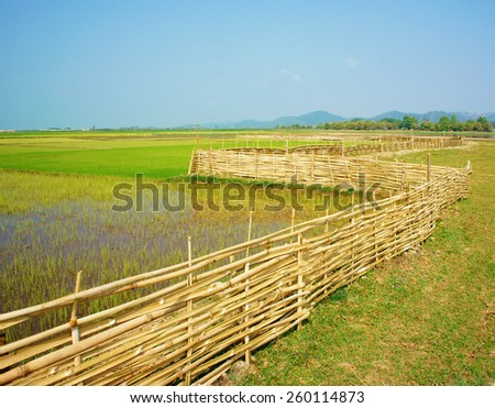 Beautiful Vietnamese rural, green paddy field with bamboo fence under sky, Vietnam countryside is place for ecotourism with fresh air, beauty scene, nice agriculture farm