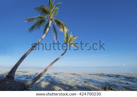 Beautiful view coconut Grove, palm tree in Tropical Beach  - stock photo