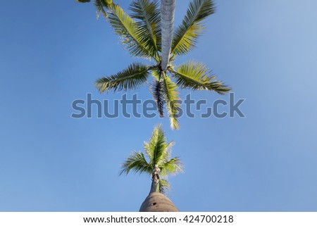 Beautiful view coconut tree Grove, palm tree in Tropical Beach