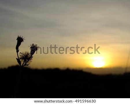 beautiful view , grass flower on mountain with twilight sky when sunset