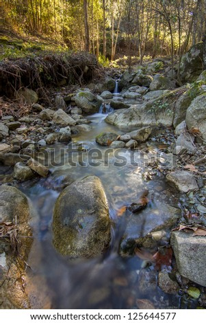 Beautiful view of a fresh flowing creek in a healthy forest.