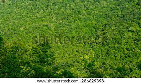 Beautiful view of a green forest in the mountains - stock photo