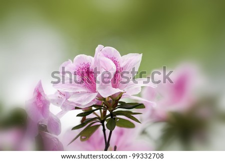 beautiful view of a group of colorful flowers in spring - stock photo