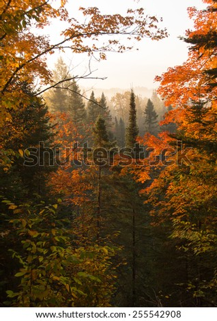 Beautiful view of a northern Wisconsin valley at dawn with vibrant fall colors shrouded by an early morning fog. - stock photo