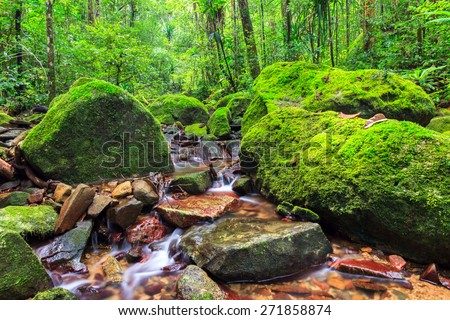 Beautiful view of a stream in the rainforest jungle of the Masoala National Park in Madagascar, a UNESCO world heritage site - stock photo