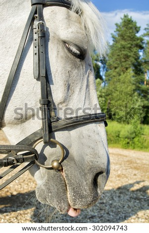 Beautiful view of a white horse, close view