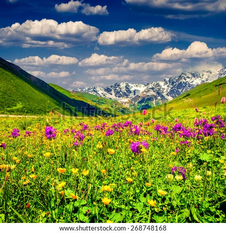Beautiful view of alpine meadows in the Caucasus mountains. Upper Svaneti, Georgia. - stock photo