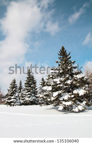 Beautiful view of fir tree full of snow with a blue sky after a snowstorm