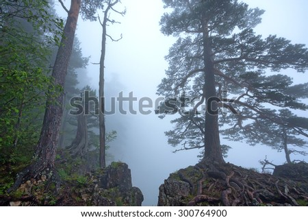 Beautiful view of foggy forest on the edge of mountain abyss - stock photo
