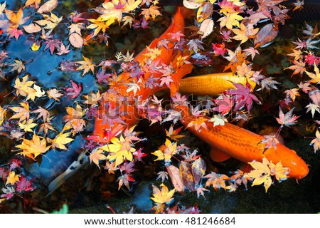Fish Pond Stock Images Royalty Free Images Vectors