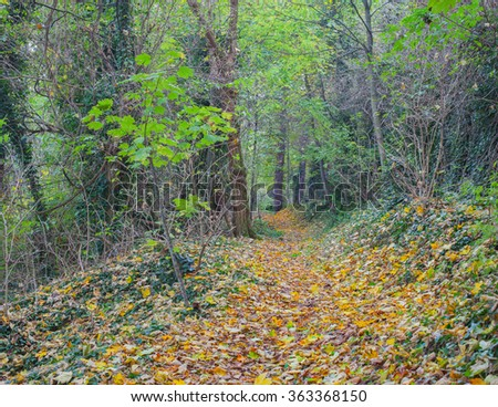 Beautiful view of path in a dense forest in autumn,colored background - stock photo