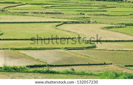 Beautiful view of Rice fields, Bhutan