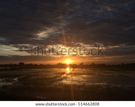 Beautiful view of rice paddy field during sunrise in Thailand. Nature composition