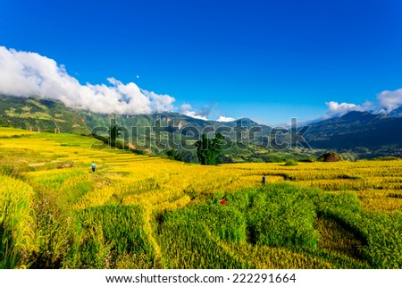 Beautiful view of ripen rice terraced fields with early morning mists flying above.  Location: Y Ty, Lao Cai province, Vietnam. - stock photo