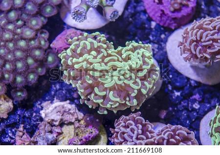 beautiful view of sea life - stock photo