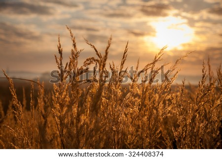 Beautiful view of sunrise over golden meadow - stock photo