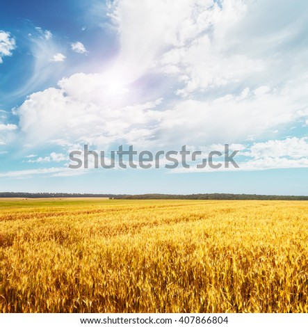 Beautiful view of the field and the blue sky on a sunny day. Dramatic and picturesque scene. Location place: Ukraine, Europe. Artistic picture. Beauty world. Soft filter effect. - stock photo