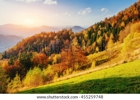 Beautiful view of the forest on a sunny day. Autumn landscape. Carpathians. Ukraine, Europe