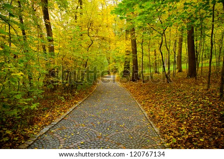 beautiful view of the park forest and mountain brook. wood - stock photo