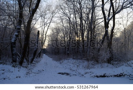 Beautiful view of the road in forest in winter