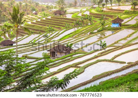 beautiful view of traditional paddy field in Bali Indonesia