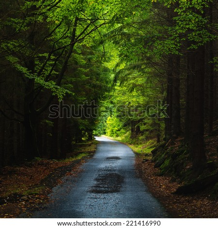 Beautiful view over a straight road in the dark wood - stock photo