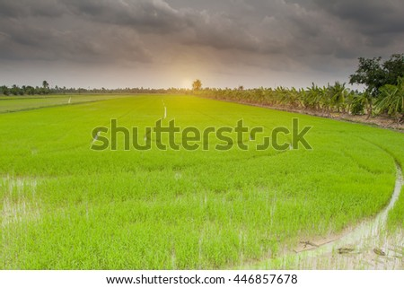 Beautiful view rice field with clouds on sky, Concept raining coming in spring season,copy space.