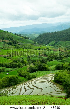 Beautiful views and green rice field terrace.