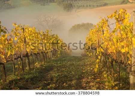 beautiful vineyard in tuscany in autumn on a sunny foggy morning - stock photo