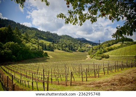 Beautiful vineyard land located in the Napa Valley, California - stock photo