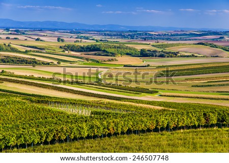 Beautiful vineyard landscape of Austria, Europe. - stock photo