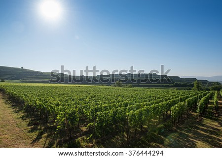 Beautiful Vineyard Landscape With Blue Sky And Sunshine in Ihringen, Kaiserstuhl, Germany. This Region Has The Most Hours Of Sunshine In Germany. Travel And Wine-making Background.