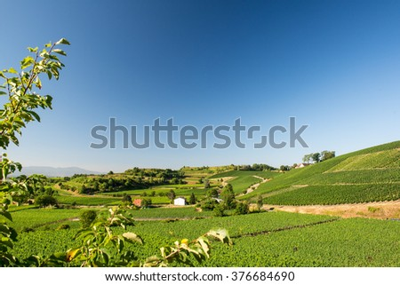 Beautiful Vineyard Landscape With Blue Sky And Sunshine in Ihringen, Kaiserstuhl, Germany.