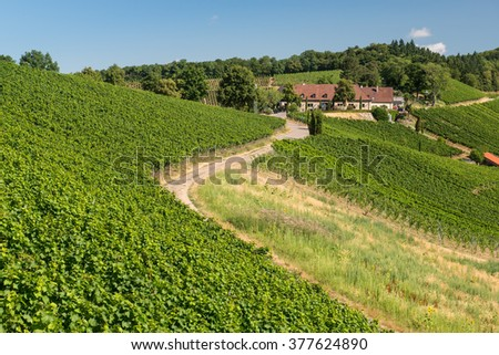 Beautiful Vineyard Landscape With Blue Sky And Sunshine in Ihringen, Kaiserstuhl, Germany. This Region Has The Most Hours Of Sunshine In Germany. Travel And Wine-making Background. - stock photo