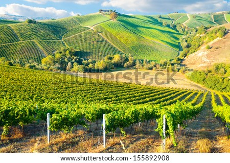 Beautiful vineyard on hills - stock photo