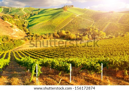 Beautiful vineyard on sunset - stock photo