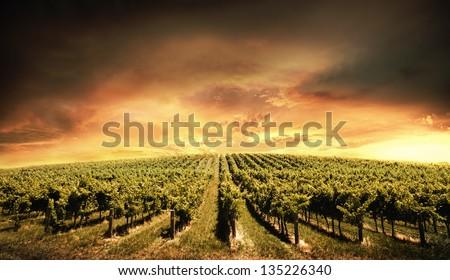 Beautiful Vineyard Sunset in South Australia - stock photo