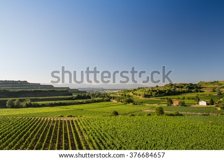Beautiful Vineyard Terraces With Blue Sky And Sunshine in Ihringen, Kaiserstuhl, Germany.