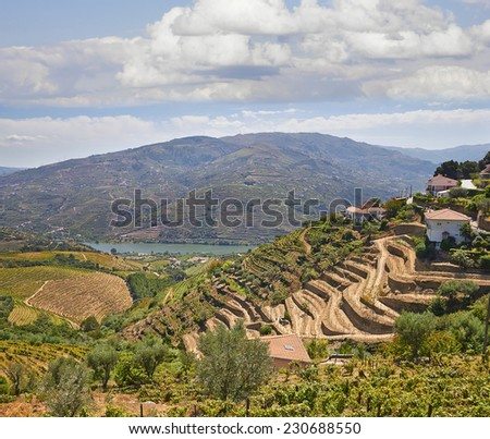 Beautiful Vineyards Douro Valley, Portugal - stock photo