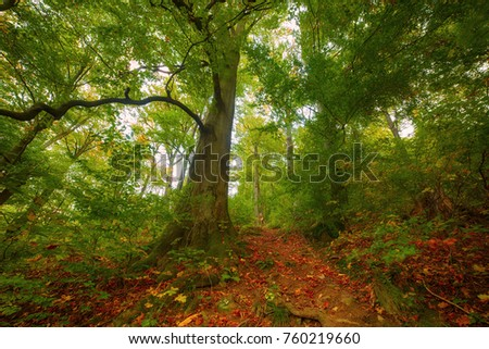 Beautiful vintage autumn landscape with fallen dry red maple leaves and green beech trees
