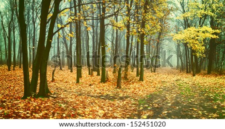 Beautiful vintage autumn landscape with fog in forest, fallen leaves and road - stock photo