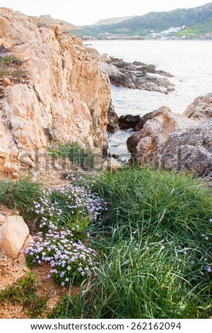Beautiful violet flowers and green grass on the beach of the island of Mykonos. Greece. - stock photo