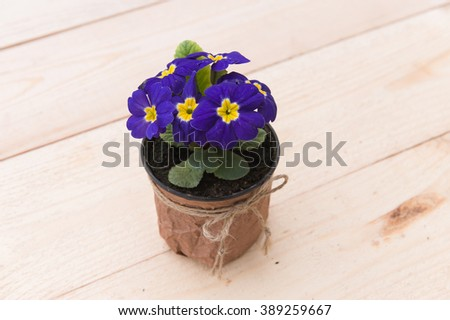 Beautiful violet in a pot on the wooden plate.