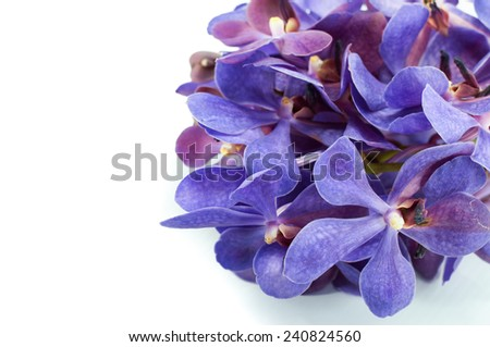 Beautiful Violet Orchid Bud isolated on white background - stock photo