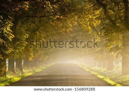 Beautiful vivid autumn scene with misty road through the alley - stock photo
