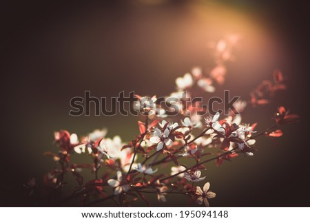 Beautiful vivid blossom. Spring flowering trees with colorful bokeh and shallow DOF. - stock photo