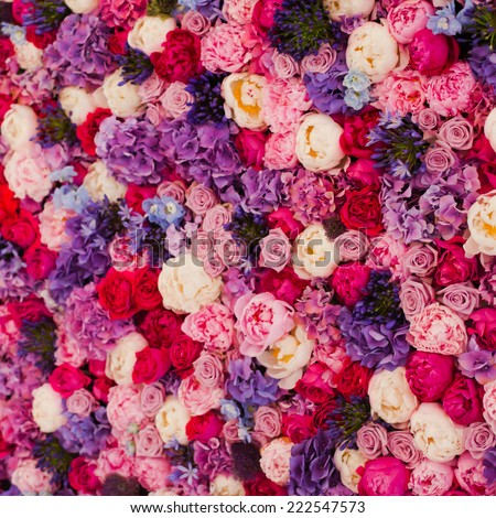 beautiful wall made red violet purple stock photo 222547573, Ideas