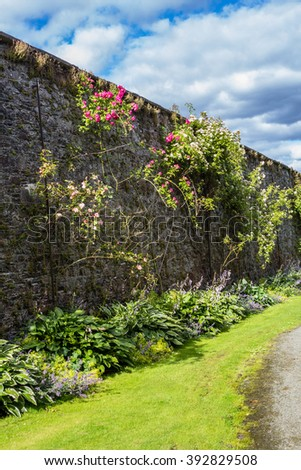 Beautiful walled garden with climbing roses  - stock photo