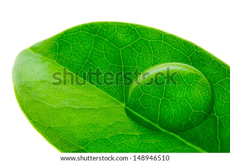 Beautiful water drop on a leaf shoot in macro lens - stock photo